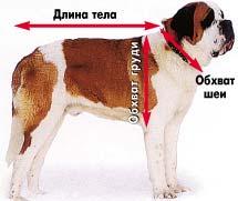 как  шить одежду для собак мерки