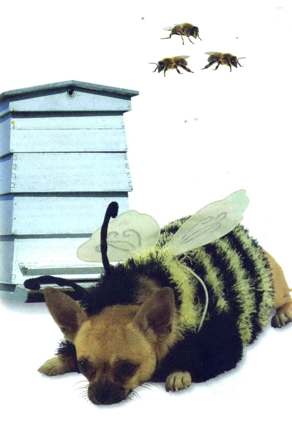 """Вязаный костюм для собаки """"Пчелка"""""""